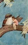Outhwaite Kookaburra